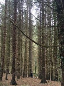 Binaural Forest